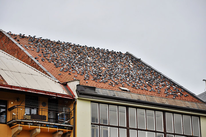 A2B Pest Control are able to install spikes to deter birds from roofs in Plaistow.