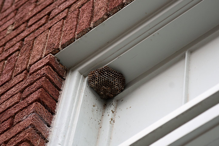 We provide a wasp nest removal service for domestic and commercial properties in Plaistow.